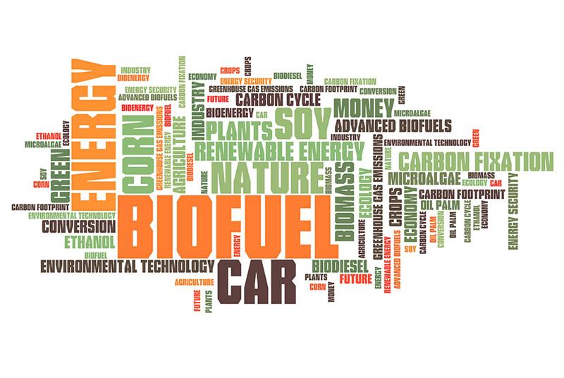 biofueld b5 or b20